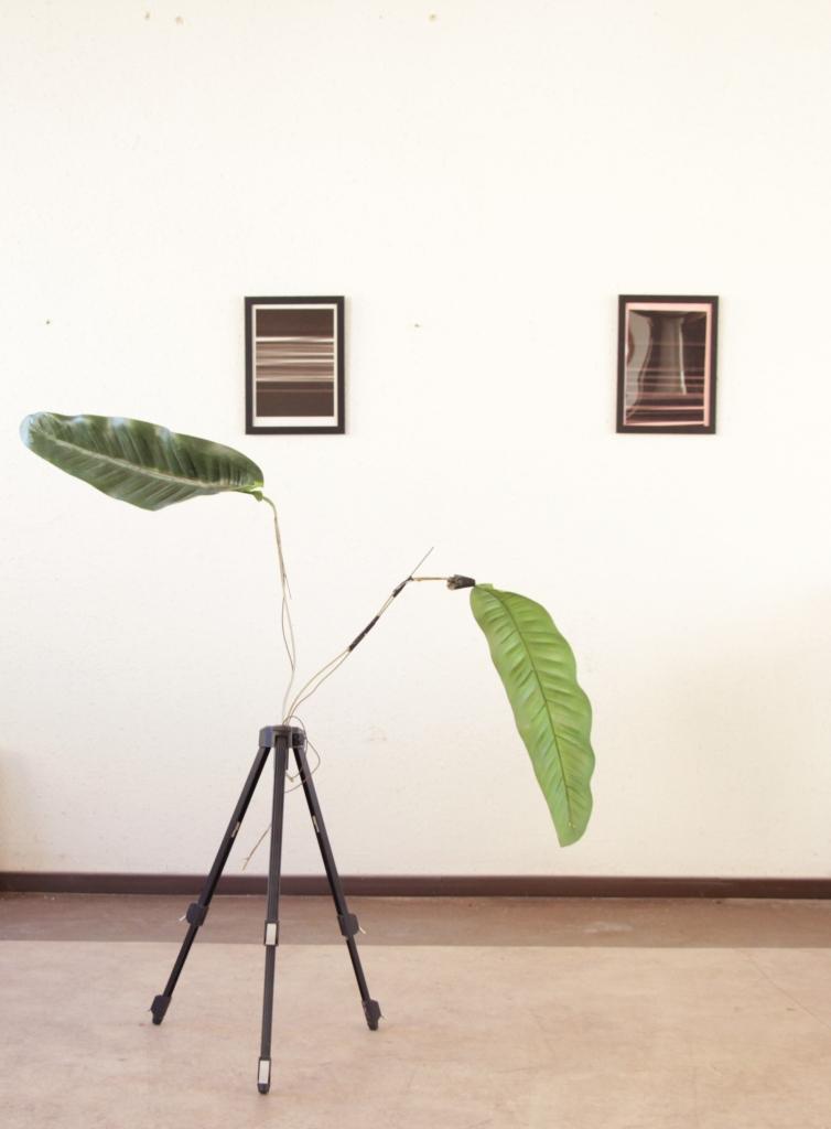 """bilder aus der serie """"free failing"""" mit bananenblattstativ im atelier"""